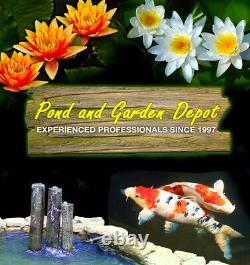 Easypro Pa66dp Sentinel Deluxe Rocking Piston 1/2 HP Pond Aeration Kit- 4.5 Cfm